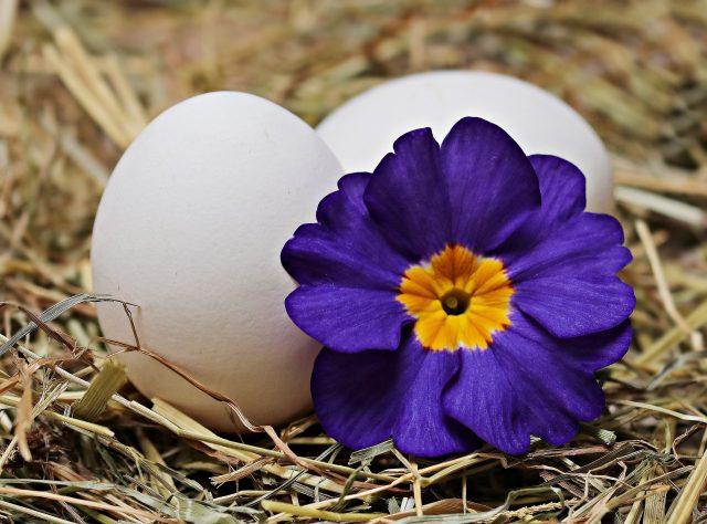 卵にシーズンがある